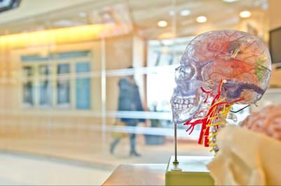left-right-half-brain