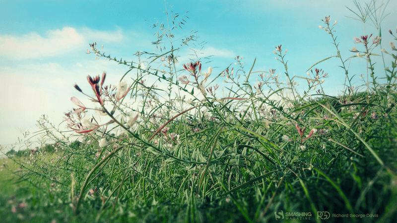 A photo of a wild flower field.