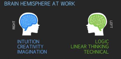 data-visualization-visually-infographic-web-designer-vs-web-developer-brain-hemisphere